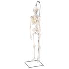 Mini Human Skeleton - Shorty - on hanging stand, 1000040 [A18/1], 소형 인체 골격 모형