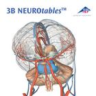 3B NEUROtables™ in French, 1002494 [S0290], 두뇌 모형