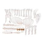 Sheep skeleton (Ovis aries), female, disarticulated, 1021026 [T300361fU], 농장 동물