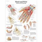 Hand and Wrist Chart - Anatomy and Pathology, 4006659 [VR1171UU], 골격계