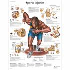 Sports Injuries Chart, 4006664 [VR1188UU], 근육