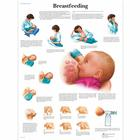 Breastfeeding Chart, 4006706 [VR1557UU], 육아교육
