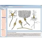 Nervous system and transmission of information Part I, Interactive CD-ROM, 1004280 [W13511], 생물학 소프트웨어