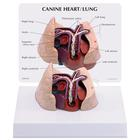 Canine Heart and Lung Model, 1019586 [W33376], 내과