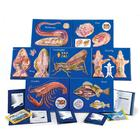 7 Model Activity Sets Zoology, 1005490 [W40230], 생물학 탐구활동 세트