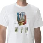 Anatomical T-Shirt Tooth, L, W41030, 해부학 티셔츠